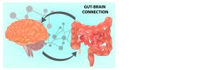 Brain-Gut-Immune System Connection