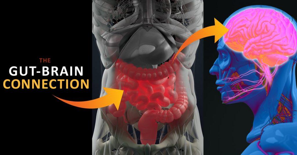 Brain-Gut-Immune System Connection chicago